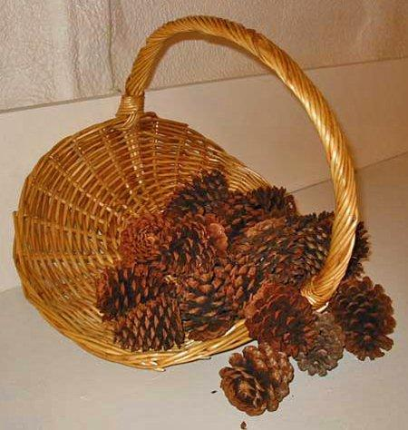 cones_in_basket_450